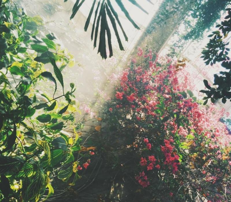 2-efect-pozitiv-asupra-plantelor